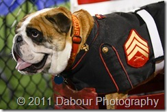 U.S. Marine Bulldog at USSBA Festival